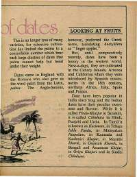 December 1975 English Chandamama magazine page 31